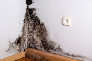 mold remediation Indianapolis